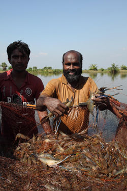 A shrimp farmer in Khulna