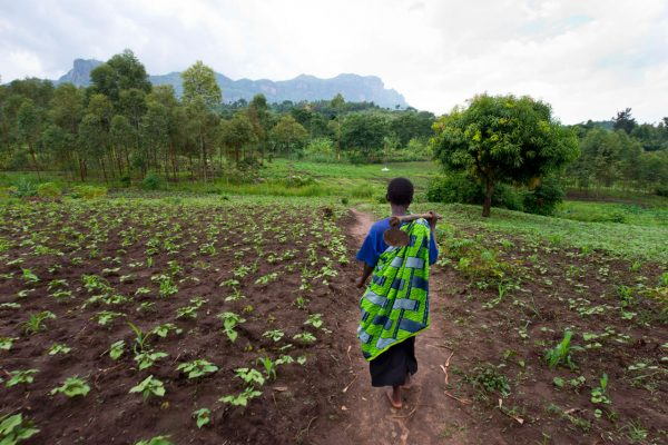 The sweet, miracle food that is fighting malnutrition in Uganda