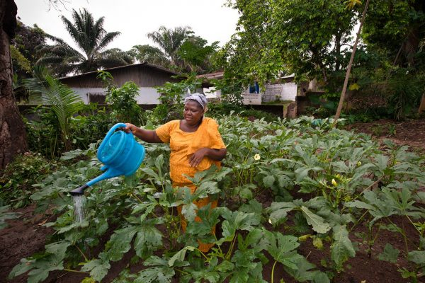 Liberia's crops against the rebellious weather