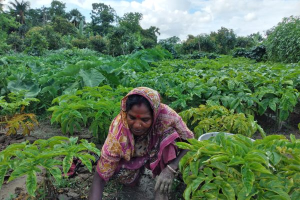Building resilience amidst growing food insecurity crisis